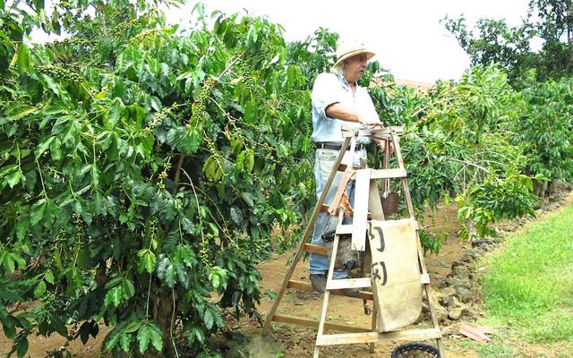 半日観光  コナコーヒー農園と名物・マナゴホテルのランチ