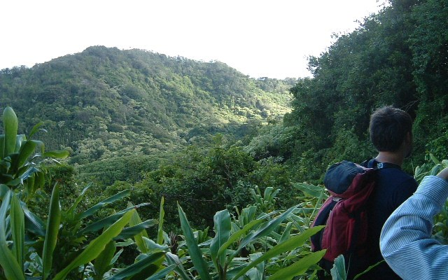 ジャングル・ハイキング・ツアー