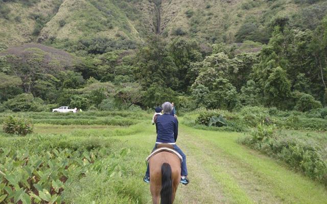 日本語ガイドと行く ワイピオ渓谷谷乗馬