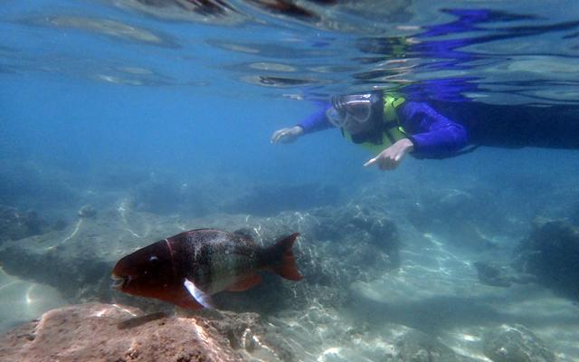 ハナウマ湾シュノーケルとパラセイル