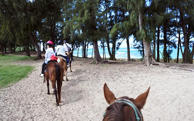 海辺乗馬45分とノースショア観光