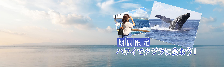 slider_whale.jpg